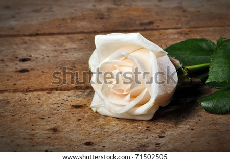 White Rose on a rustic old vintage table and copy space - stock photo
