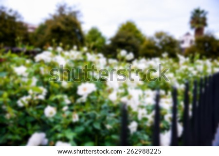White rose with steel fence in Blur style - stock photo