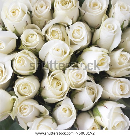 White roses as a background - stock photo