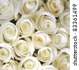 White roses background - stock photo