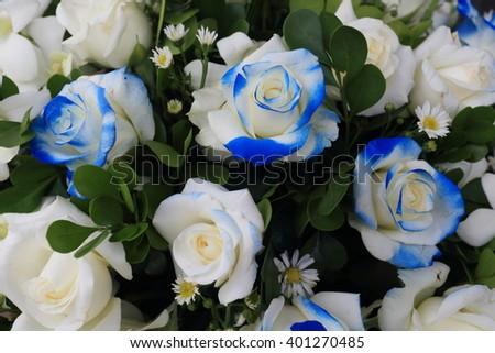 White roses background - stock photo