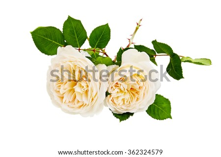 white roses bouquet on a white background - stock photo