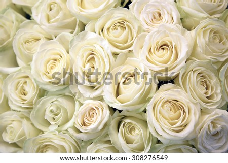 White roses. Floral Texture and background. Flowers closeup. Wedding and wedding accessory. The rose petals. A large bouquet. - stock photo