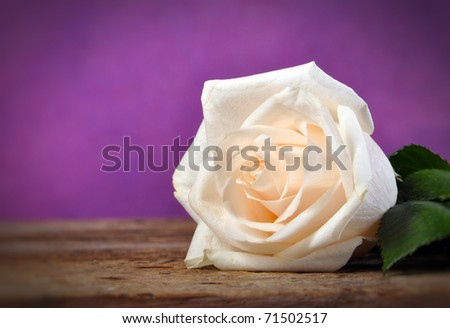 White Roses on a rustic old vintage table with purple background and copy space - stock photo