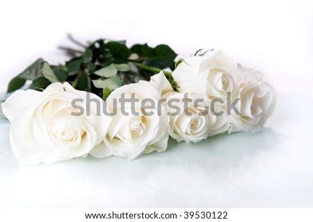 White roses on white ground - stock photo