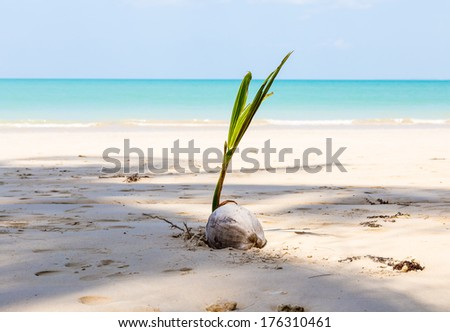 White sand beach and coconut with blue sky.