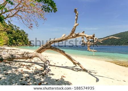 White sand beach in Adang-Rawee. Thailand, Lipe island. - stock photo