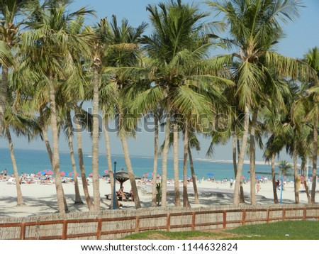 white sand beach view with several palm trees in sunshine