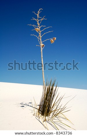 White Sands National Park Dunes - stock photo
