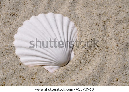 white scallop shell in sand room for your text - stock photo