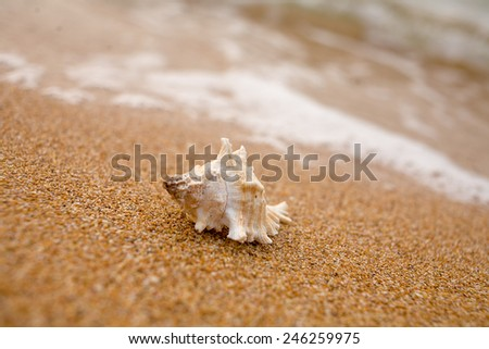 White sea shell on the sandy shore - stock photo
