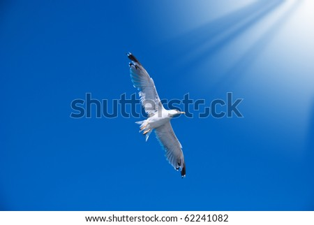 White seagull among the clear dark blue sky - stock photo