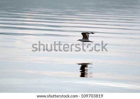 white seagull flying above the water surface - stock photo