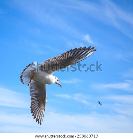 White seagull flying on blue cloudy sky background - stock photo