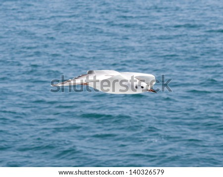 white seagull flying on sea