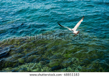 White seagull flying over clear turquoise sea water. - stock photo