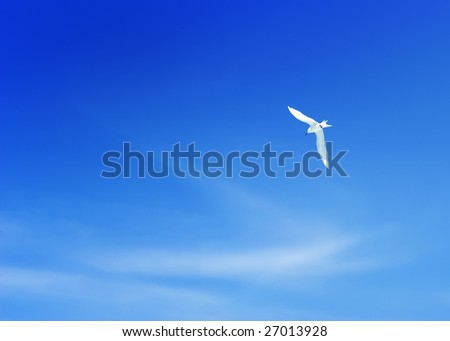 White seagull in deep blue sky - stock photo