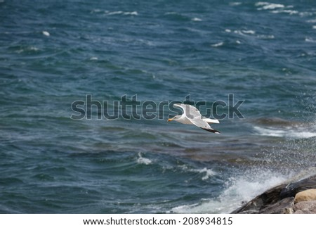 White seagull in flight on a deep blue sky - stock photo
