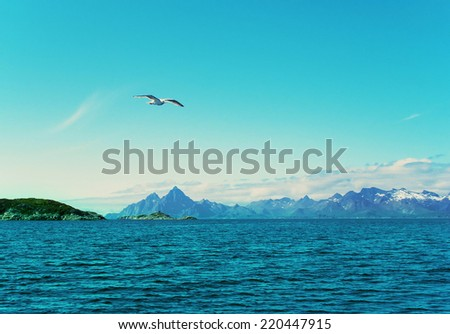 White seagull over Norwegian sea - stock photo