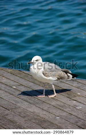 White seagull standing by the water - stock photo