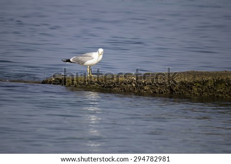 White seagull standing on a concrete breakwater. Selective focus and shallow dof. - stock photo