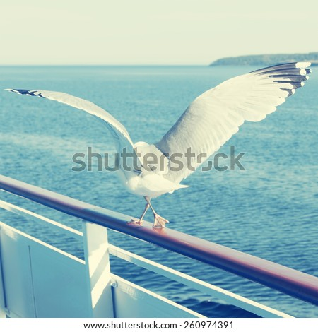 White seagull walking on the deck of a ship.Special toned photo in vintage style - stock photo