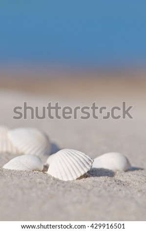 White seashells on sandy beach with blue sky; Holiday memories; Maritime motif for postcard - stock photo