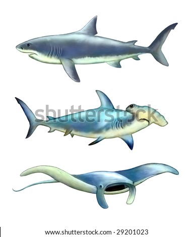 White shark, hammer fish and manta ray. Digital illustration. - stock photo