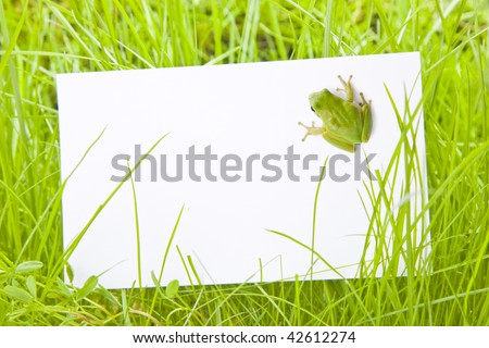White Sign Amongst Green Grass with Tree Frog - stock photo