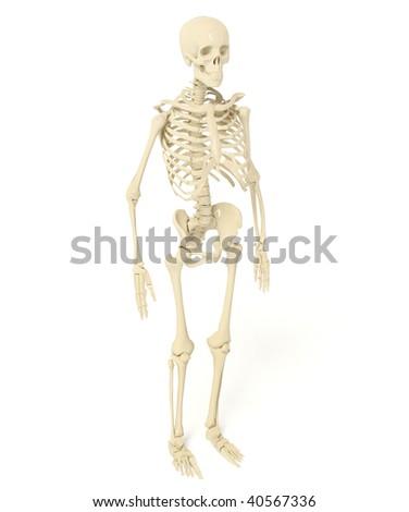 white skeleton  on isolated background - stock photo