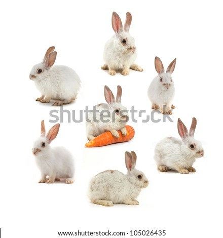 White small rabbit isolated over white background - stock photo