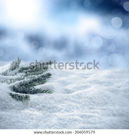 white snow and green tree  - stock photo