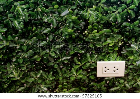 White socket on forest wall - stock photo
