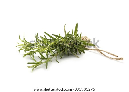 white space and green plant  - stock photo