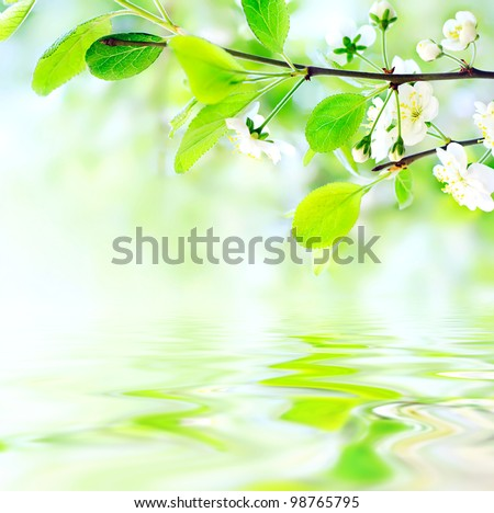 white spring flowers on a tree branch over green bokeh background on water waves - shallow DOF - stock photo
