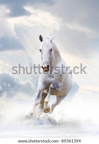 white stallion - stock photo