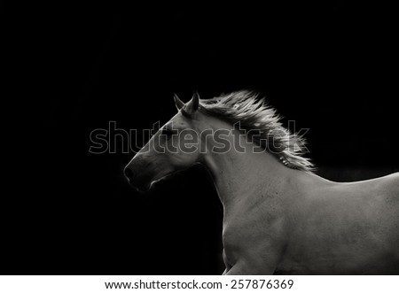 White stallion in dark running fast - stock photo