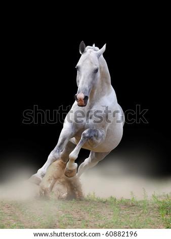 white stallion in dust - stock photo