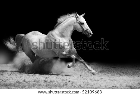 white stallion on black - stock photo