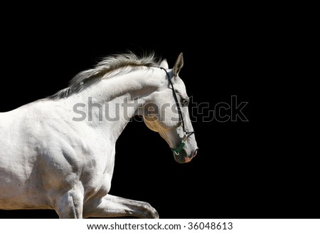 white stallion on black isolated - stock photo
