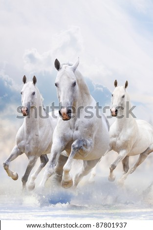 white stallions in dust over a white - stock photo