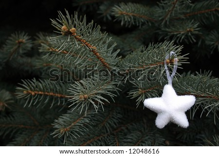 white star on fir as background
