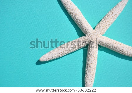White starfish on pretty blue background room for your text - stock photo
