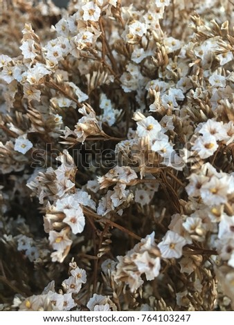 White statice flower texture background stock photo royalty free white statice flower texture background mightylinksfo