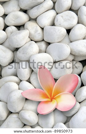 white stones with frangipani flower - stock photo