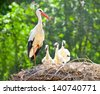 white stork family nest with little babies - stock photo
