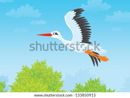 White stork flying - stock photo