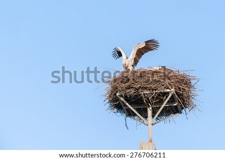 White stork in the nest on the electrical pole