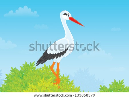 White stork perched on a treetop - stock photo