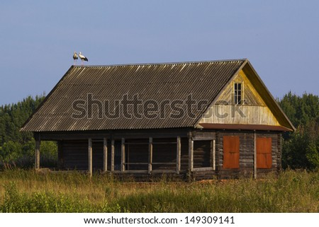 White storks on the roof of a house
